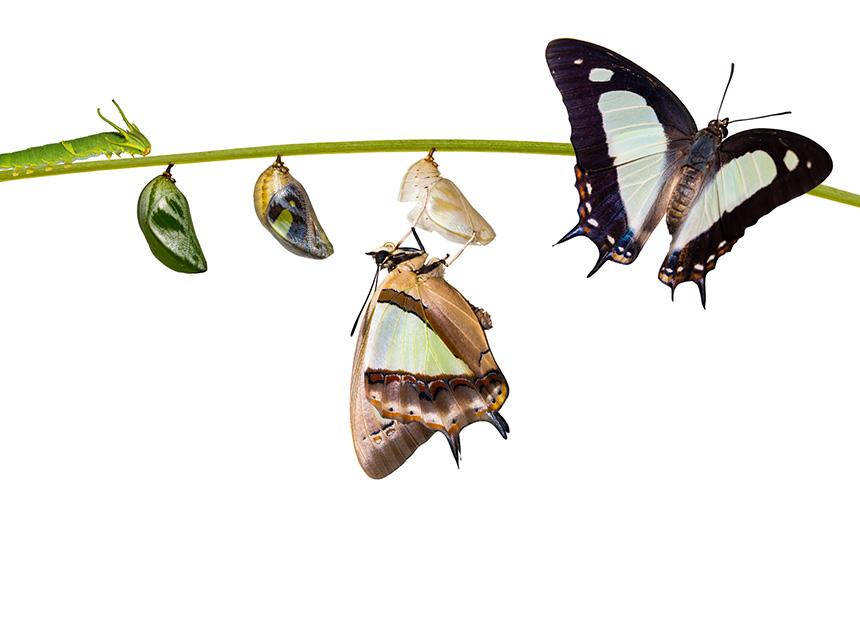 rups-vlinder-voor-jou.jpg